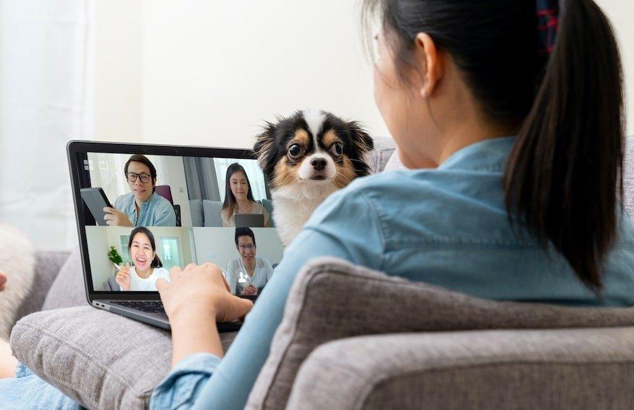 chien pendant télétravail
