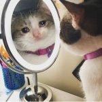 meme chat pleure mirroir