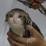 meme chat sous l'eau