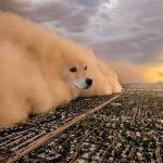 meme chien ville nuage
