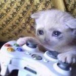 meme chat pleure manette jeux video